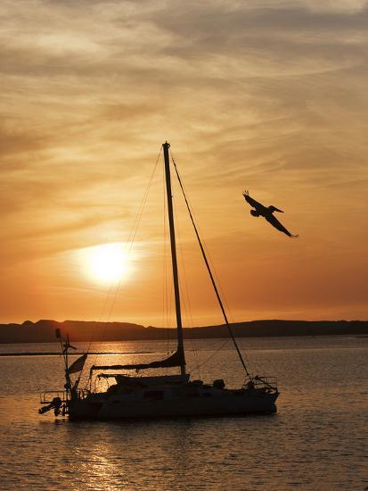 A Silhouetted Sailboat at Sunset and Flying Brown Pelican-Marc Moritsch-Photographic Print