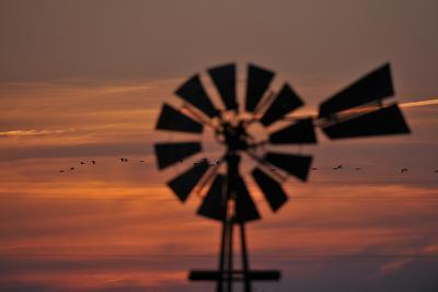 A Silhouetted Windmill and a Flock of Migrating Sandhill Cranes at Sunset-Michael Forsberg-Photographic Print