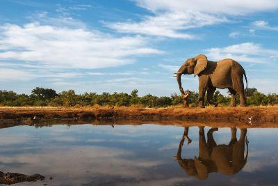 A Single Elephant is Reflected on the Still Surface of a Waterhole on a Beautiful Day in Botswana-Mike Dexter-Photographic Print