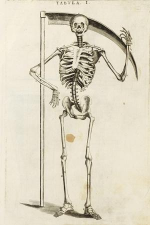 https://imgc.artprintimages.com/img/print/a-skeleton-holding-a-scythe-in-the-style-of-a-grim-reaper_u-l-pw7ke50.jpg?p=0