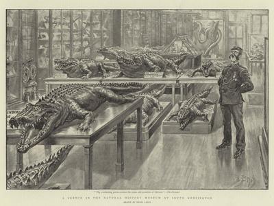 https://imgc.artprintimages.com/img/print/a-sketch-in-the-natural-history-museum-at-south-kensington_u-l-pumk6e0.jpg?p=0
