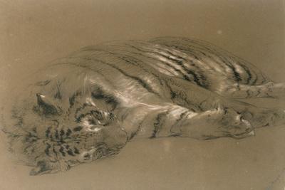 https://imgc.artprintimages.com/img/print/a-sleeping-tiger-1876_u-l-plf8e40.jpg?p=0
