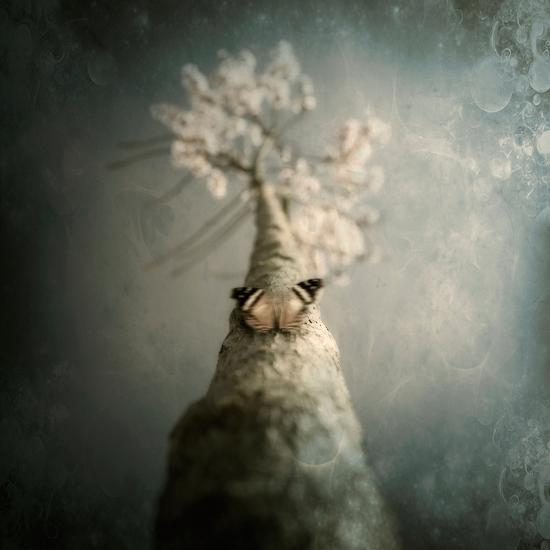 A Small Butterfly Sitting on a Tree with Overlaid Textures-Trigger Image-Photographic Print