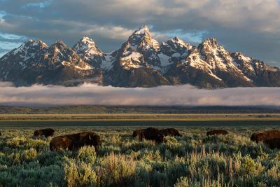 https://imgc.artprintimages.com/img/print/a-small-herd-of-bison-grazing-below-the-teton-mountains-in-jackson-hole-grand-teton-np-wyoming_u-l-q19nrte0.jpg?p=0