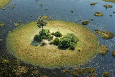 A Small Island in a Wetland in Botswana-Beverly Joubert-Photographic Print