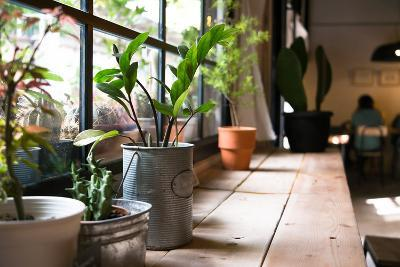 A Small Plant Pot Displayed in the Window- imnoom-Photographic Print