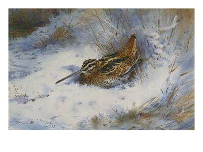 A Snipe in the Snow-Archibald Thorburn-Giclee Print