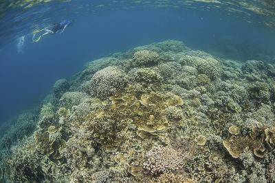 A Snorkeler Explores a Healthy Coral Reef in Palau's Lagoon-Stocktrek Images-Photographic Print