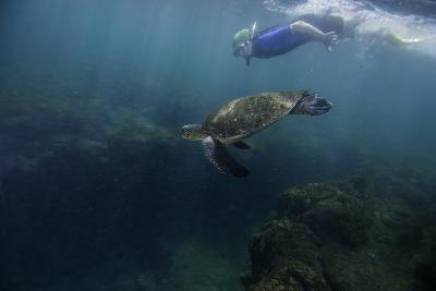 A Snorkeler Swimming with a Green Sea Turtle-Jad Davenport-Photographic Print