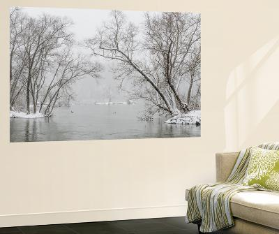 A Snowy Potomac River Scenic with Ducks and Geese-Irene Owsley-Wall Mural