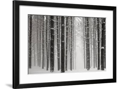 A Snowy Walk V-James McLoughlin-Framed Photographic Print