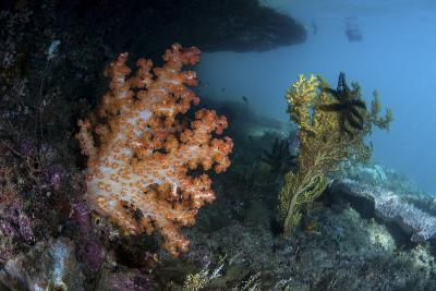 A Soft Coral Colony and Invertebrates in Raja Ampat, Indonesia-Stocktrek Images-Photographic Print