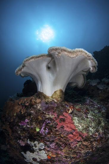 A Soft Coral Colony Grows on a Reef Dropoff in Lembeh Strait-Stocktrek Images-Photographic Print