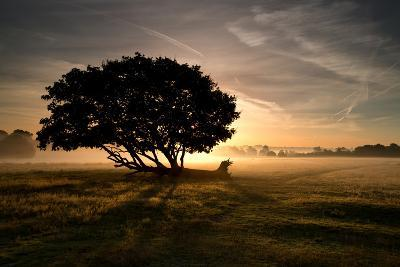 A Solitary Fallen Live Tree Under a Dramatic Sky on a Misty Morning-Alex Saberi-Photographic Print
