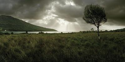 A Solitary Tree Overlooks Loch Na Dal in the Distance-Macduff Everton-Photographic Print