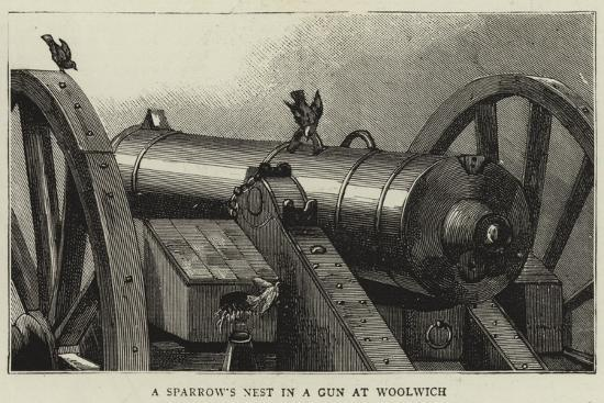 A Sparrow's Nest in a Gun at Woolwich--Giclee Print