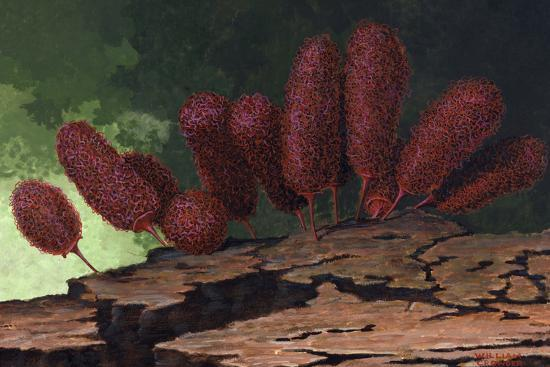 A Species of Slime Mold-William H. Crowder-Giclee Print