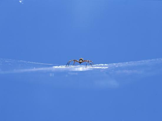A Spider Perched on Its Web-John Dunn/Arctic Light-Photographic Print
