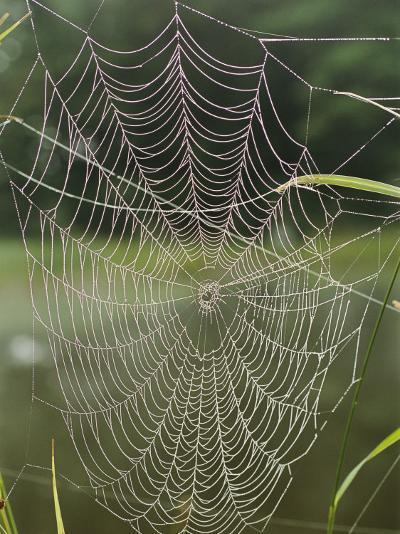 A Spiderweb Covered in Dew-Darlyne A^ Murawski-Photographic Print