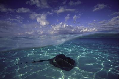 A Split Level View of a Southern Stingray Resting on the Sea Floor, with Puffy Clouds Overhead-David Doubilet-Photographic Print
