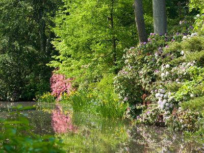 A Springtime View of Plants Blooming Along the Side of a Pond-Darlyne A^ Murawski-Photographic Print
