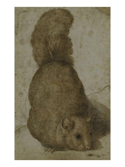 A Squirrel-Giovanni da Udine (Attr to)-Giclee Print