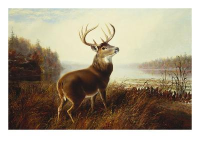 A Stag by a Lake-Arthur Fitzwilliam Tait-Giclee Print