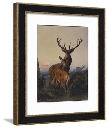 A Stag with Deer in a Wooded Landscape at Sunset-Carl Friedrich Deiker-Framed Giclee Print