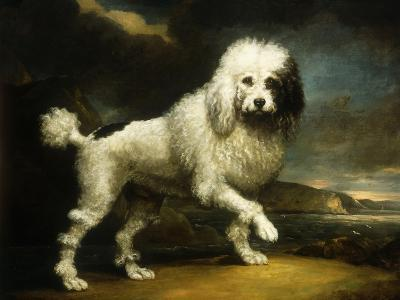 A Standard Poodle in a Coastal Landscape-James Northcote-Giclee Print
