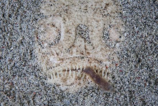 A Stargazer Fish Camouflages Itself in the Sand-Stocktrek Images-Photographic Print