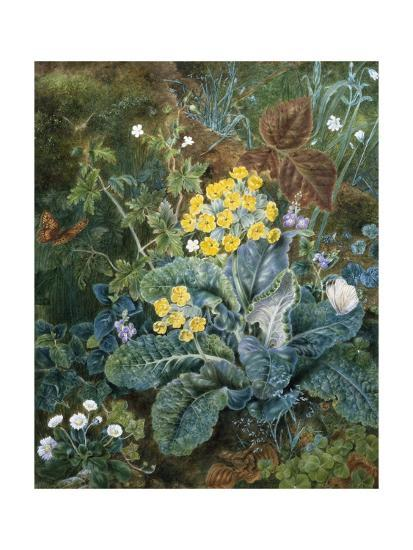 A Still Life of Polyanthus and Butterfly-Mary Margetts-Giclee Print
