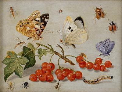 A Still Life with Sprig of Redcurrants, Butterflies, Beetles, Caterpillar and Insects-Jan Van, The Elder Kessel-Giclee Print