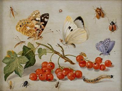 https://imgc.artprintimages.com/img/print/a-still-life-with-sprig-of-redcurrants-butterflies-beetles-caterpillar-and-insects_u-l-pg5s2g0.jpg?p=0