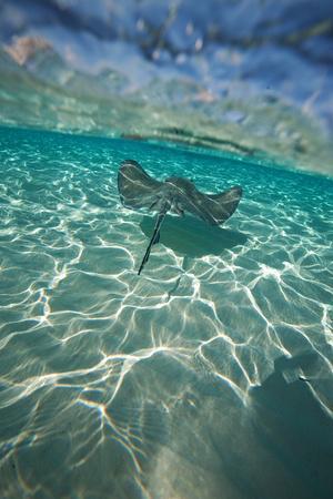 https://imgc.artprintimages.com/img/print/a-stingray-swims-over-a-series-of-shallow-sandbars-off-the-cayman-islands_u-l-pswi2d0.jpg?p=0