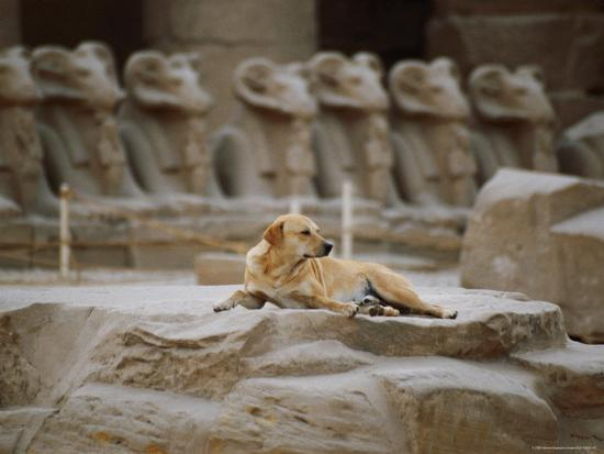 A Stray Dog Rests on the Remnants of a Pedestal-Stephen St^ John-Photographic Print