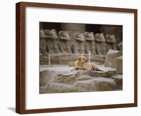 A Stray Dog Rests on the Remnants of a Pedestal-Stephen St. John-Framed Photographic Print