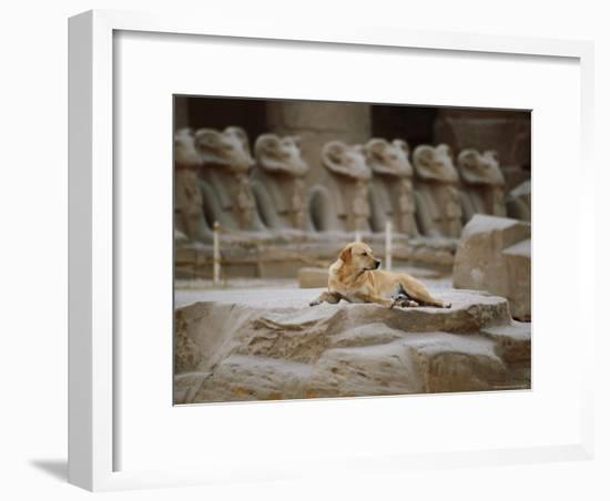 A Stray Dog Rests on the Remnants of a Pedestal-Stephen St. John-Framed Photographic Print