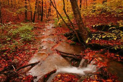 A Stream Flowing Through a Forest on an Autumn Day Near the New York/Vermont Border-Aaron Huey-Photographic Print