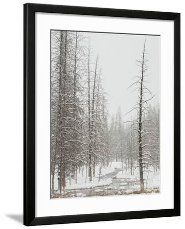 A Stream from Upper Geyser Basin Meanders Through Dead Trees Covered in Snow in Winter-Tom Murphy-Framed Photographic Print