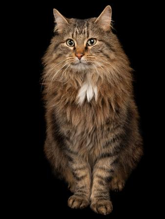 https://imgc.artprintimages.com/img/print/a-studio-portrait-of-a-domestic-house-cat-named-rocket_u-l-pnck7h0.jpg?p=0