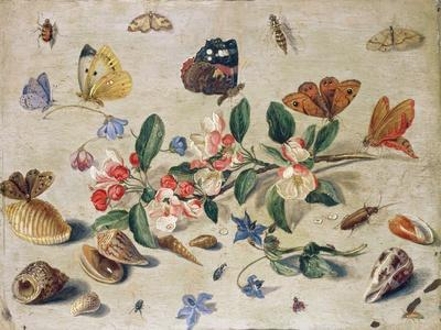https://imgc.artprintimages.com/img/print/a-study-of-flowers-and-insects_u-l-pprrir0.jpg?p=0