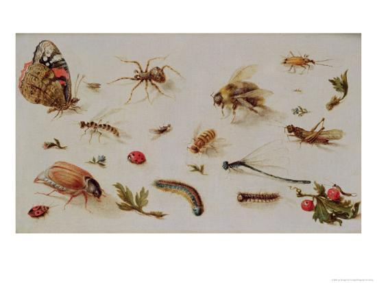 A Study of Insects-Jan Brueghel the Younger-Giclee Print