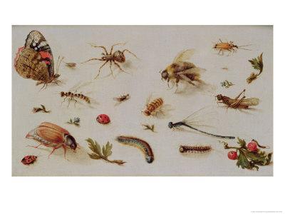https://imgc.artprintimages.com/img/print/a-study-of-insects_u-l-o2j7j0.jpg?p=0