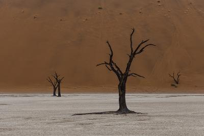 A Surreal Landscape of Dead Trees in a Clay Pan and Towering Sand Dunes-Jonathan Irish-Photographic Print