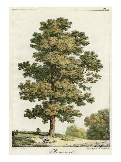 A Sweet Chestnut Tree--Giclee Print