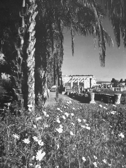 A Synagogue in the Ancient City of Capernaum, Flowers and Palm Trees in the Foreground--Photographic Print