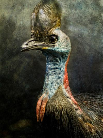 A Taxidermy Cassowary-Clive Nolan-Photographic Print