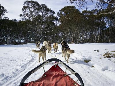 A Team of Siberian Husky Sled Dogs Pull a Sled Through Alpine Snow-Jason Edwards-Photographic Print