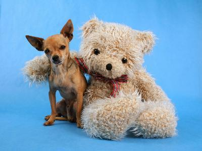 A Teddy Bear With His Arm Around A Tiny Chihuahua-graphicphoto-Photographic Print