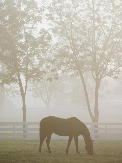 A Thoroughbred Gelding Crops the Bluegrass at the Kentucky Horse Park-Raymond Gehman-Photographic Print